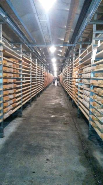 Fontina Cheeses being stored Valpelline